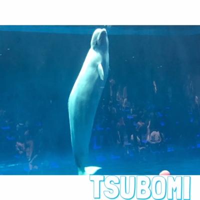 広島デリヘル風俗 BlueSapphire(ブルーサファイア)写メ日記:つぼみの投稿「旅行??♡」